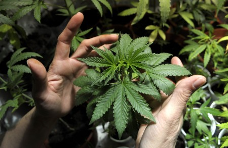 Voters legalized marijuana in Washington State