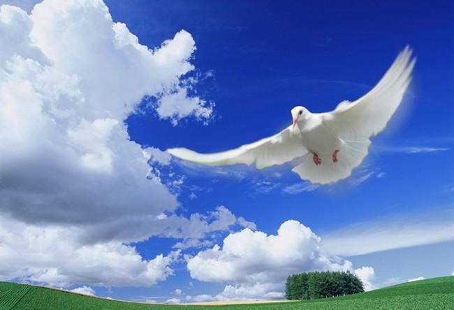 Открытка с юбилеем с голубями, прокофьева