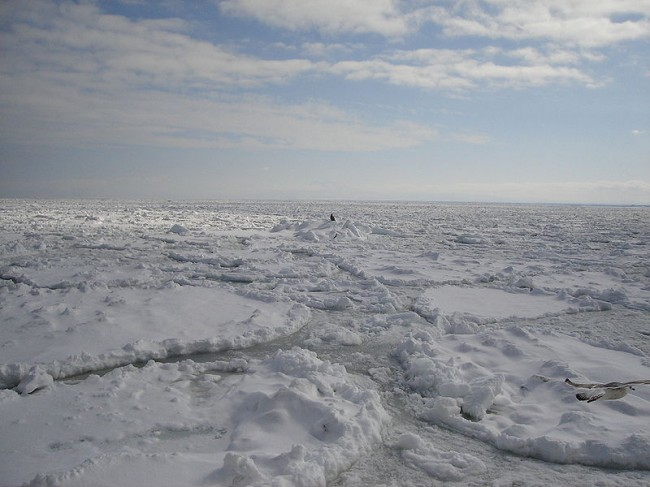 Scientists Link Arctic Ocean's Rising Acidity Level to Climate Change