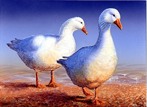 Duck Stamp Art Winner Reinstated Amid Controversy