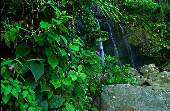 Waterfall in rain forest,