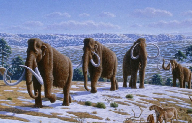 mammoth1.jpg