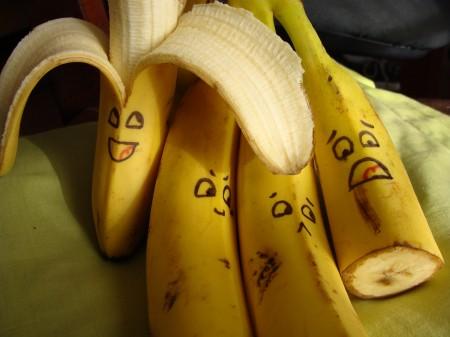Bananas turned cocaine
