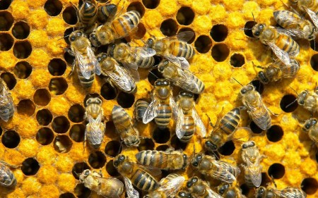 Bee sperm banks? 5 reasons to keep the whole bee