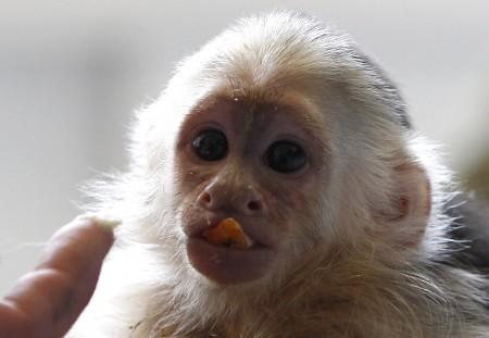 Justin Bieber Monkey Mally Monkey Island
