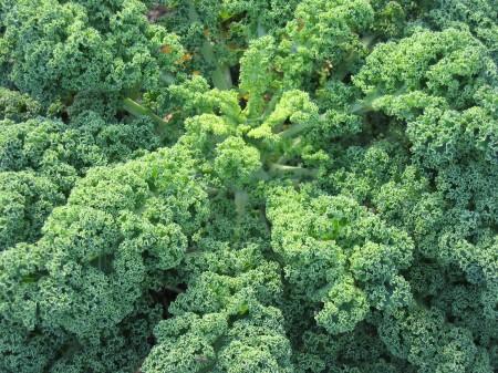 Kale King of Greens