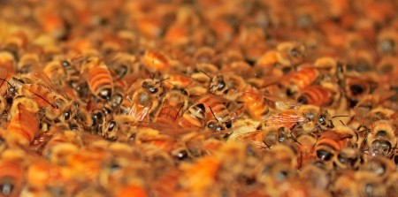 Pesticides Cause Mass Bee Death