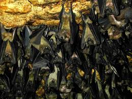 Bats In My Belfry! Lone Star State Protesters Wage War With Progress