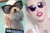 Miley Cyrus Video Parody We Can Bark (Videos)