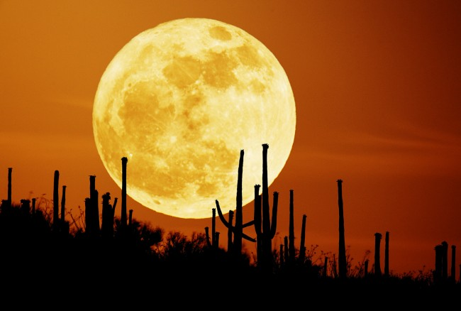 saguaromoon.jpg