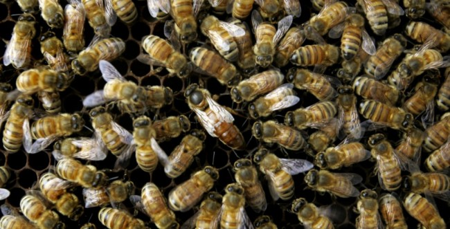 MASS GRAVE discovered OREGON Parking Lot Bees Are Involved