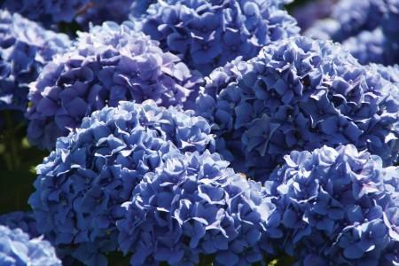 Kidney Stones Healed through Simple Garden Plant