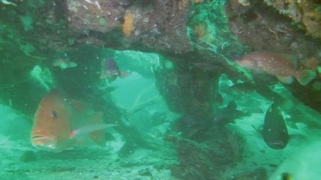 50,000 Year Old Cypress Forest Discovered Under Gulf Of Mexico