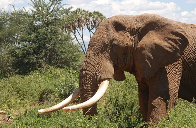 forensic-tech-may-help-track-illegal-ivory-130701-670x440