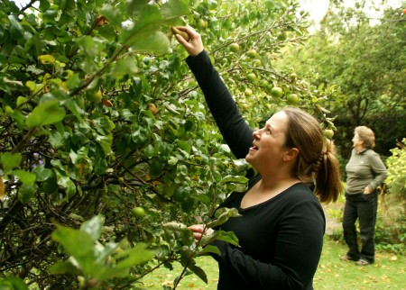 Seattle Pioneers First Fruit Forest