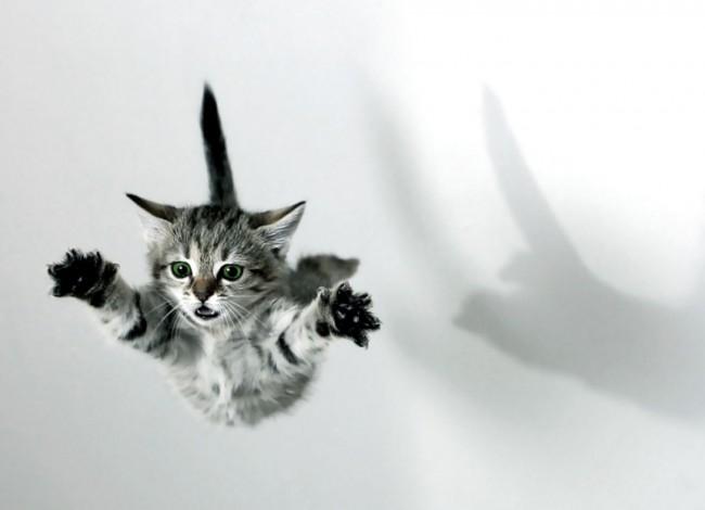 ninja-animal-1396