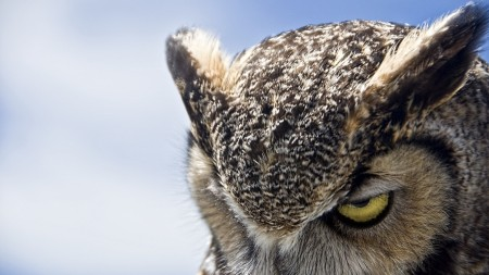 New Study Says Night Owls are Nasty