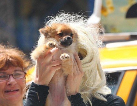 Amanda Bynes Puppy Love
