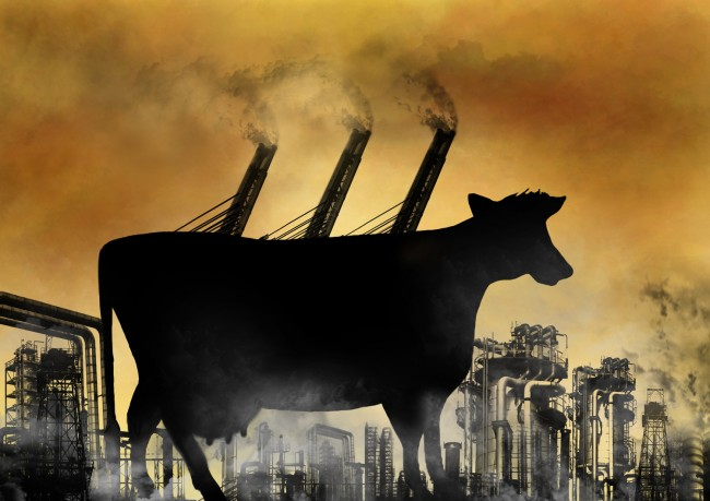 Cattle Global Warming Methane Emissions