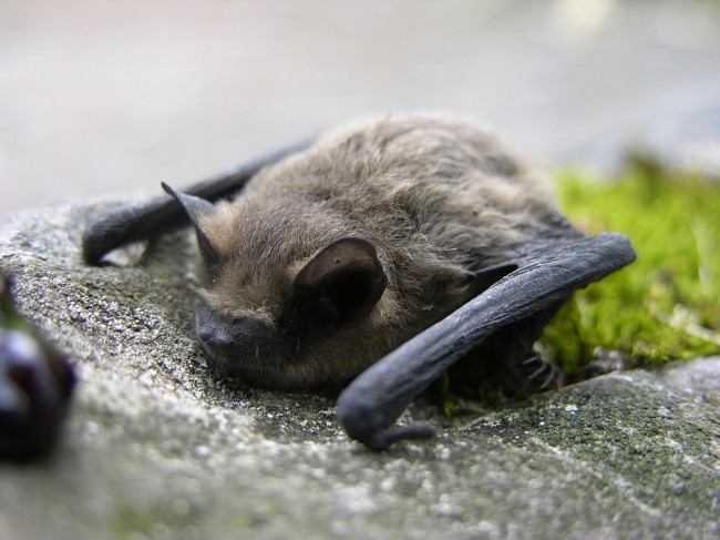 Mers Virus Bat Outbreak