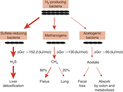 Methanogens and Methane Production
