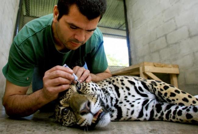 costa-rica-zoo