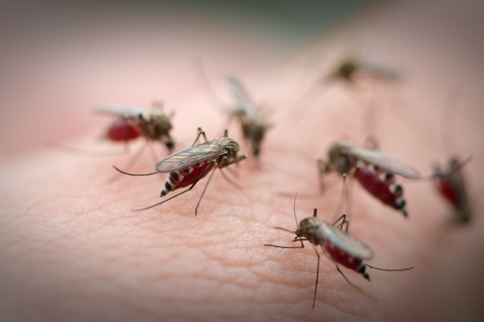 West Nile Fever Concerns Escalate