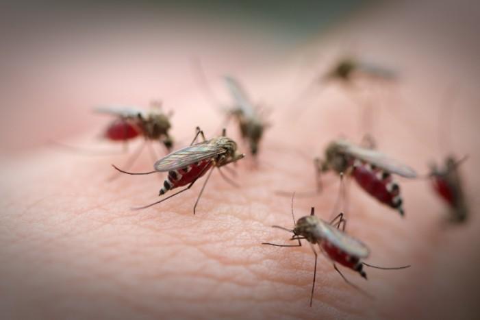 West Nile Fever Concerns Escalate