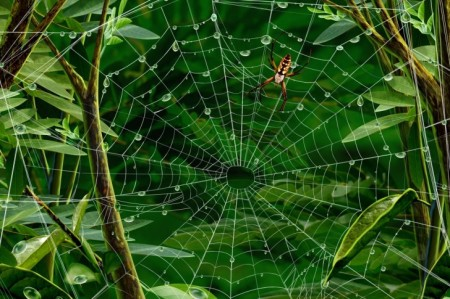 spider-web for healing wounds