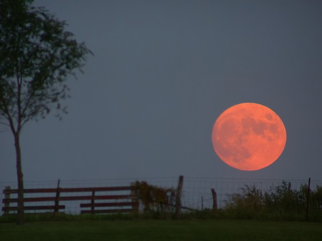 40480246_ze2oGbfW_harvest_moon