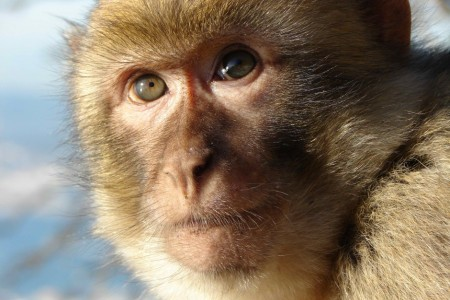 Rhesus macaque monkeys cured of HIV-like virus.