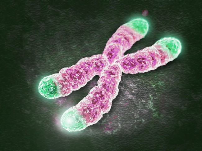 Aging process affected by lifestyle and telomere length