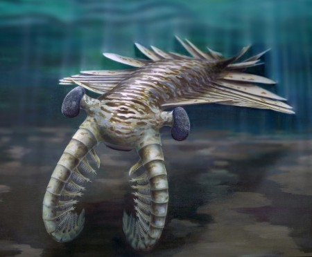 Anomalocaris reconstruction showing Cambrian organism
