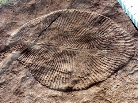 Cambrian explosion theory supported by fossils