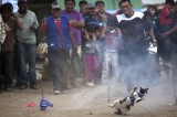 Cats Barbecued and Eaten at Peruvian Festival [Video]