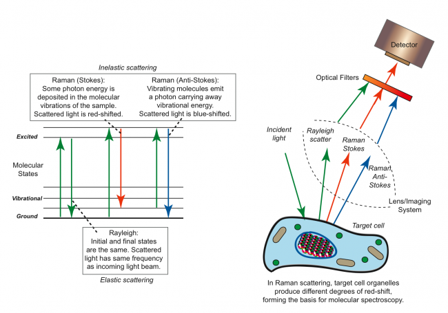Principles of Raman scattering used in detecting skin cancer