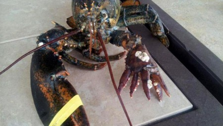 Lobster Mutation Saves from Boiling