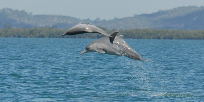 Dolphin species discovered off australian coast