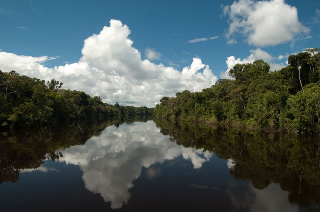 Amazon rainforest estimated to have 16000 species of tree