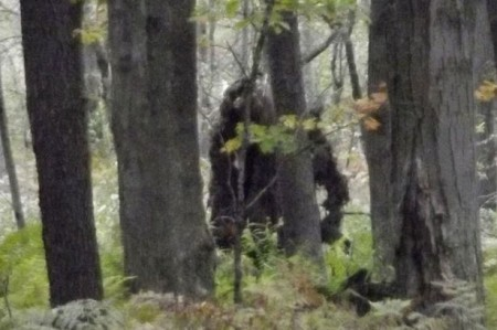 OMG Bigfoot is Real? New Study Releases 'Sasquatch DNA'