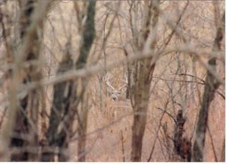 Deer Camp Murders