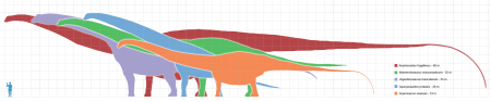 Diagram of the sauropod dinosaurs