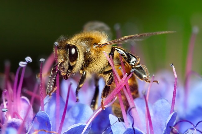 Diesel exhaust thwarts honeybee floral odor recognition1
