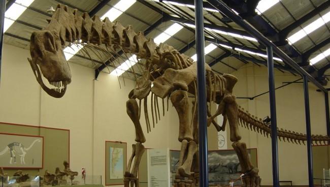 Dinosaur behemoth Argentinosaurus a lumbering giant's movements