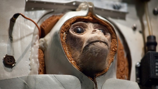 Iran to launch second monkey into space in November