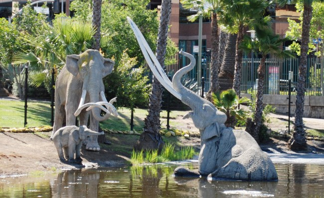 Los Angeles tar pits home to a century of fossil and microfossil excavation