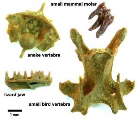 Tiny Microfossils