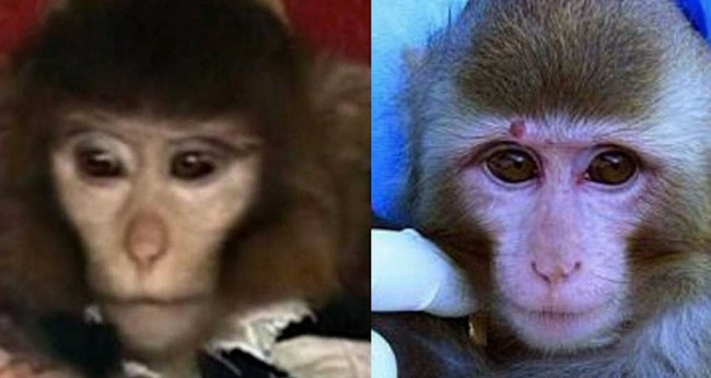 Photographs of two monkeys used before and after Iran's space launch