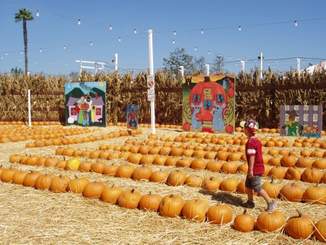 Think What Your Pumpkin Patch Can Do for You