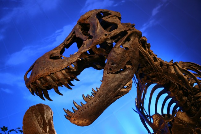 T. rex bones were found with heme present